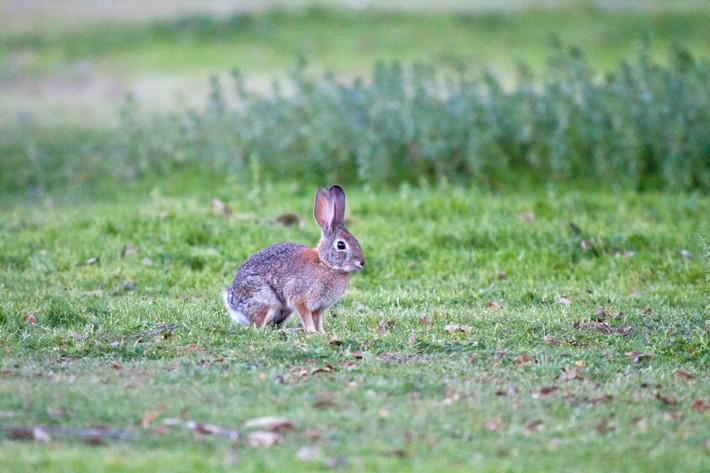 020711_bunny