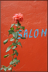 salon de rose (mhobl) Tags: red rose blumen morocco maroc salon marokko schriften amtoudi