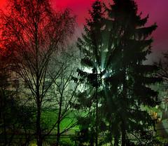 Light rays (Jumpin'Jack) Tags: street light mist tree lamp fog night back long exposure shot fir through spruce shining hdr scattered lightpollution jpingjk