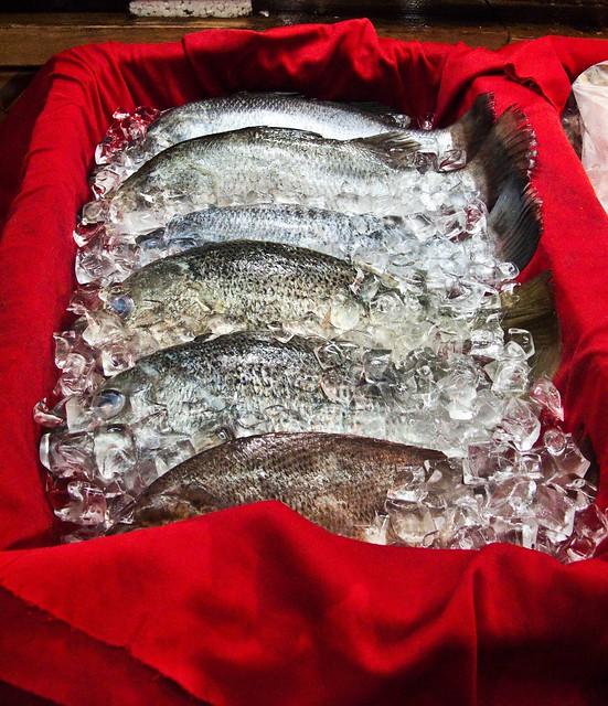 IMG_0585 Fish
