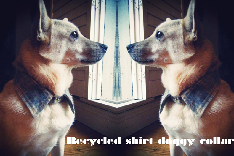 DIY recycled dog shirt collar