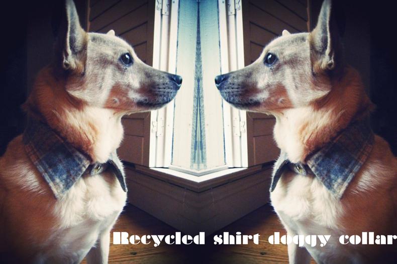 DIY recycled dog shirt collar