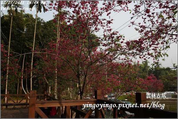 雲林古坑_20110227_I6541