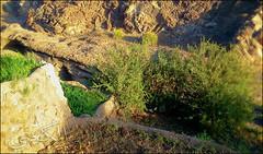 C360_2011-02-23 17-14-58 (MagicPAD - الكعبي) Tags: uae الإمارات الجزيرة الظاهر ناصر الكعبي الخطوة مصح محضة