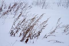 stritz-4079.jpg (jstritz) Tags: park winter fhsp