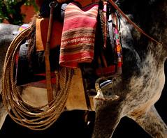 Lazo trenzao (Eduardo Amorim) Tags: horse southamerica argentina leather criollo caballo cheval lazo artwork whip poncho cavallo cavalo gauchos pferd pampa loro riendas pala apero gaucho staffa leatherwork badana cuero américadosul loros stirrup carona laço cuir gaúcho estribo amériquedusud provinciadebuenosaires recado gaúchos couro sudamérica sanantoniodeareco matras cuoio suramérica américadelsur areco südamerika reata crioulo caballoscriollos pelego criollos pilchas pilchasgauchas steigbügel recao pampaargentina americadelsud rebenque crioulos cavalocrioulo estriboarequero cincha americameridionale caballocriollo rédeas eduardoamorim cavaloscrioulos estribera estrivo xergão cojinillo étrier pampaargentino