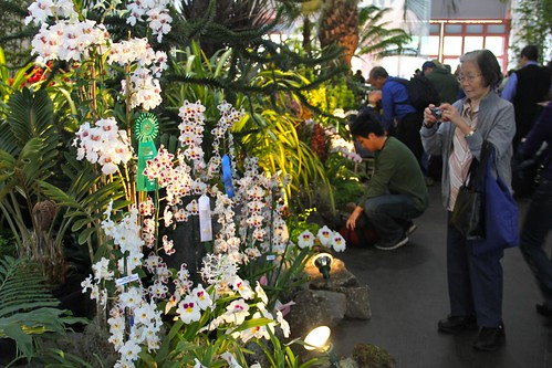 Pacific Orchid Exposition 2011
