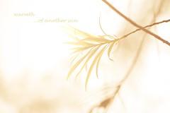 ([www.farhanahaque.com]) Tags: light beauty leaves leaf warm poetry jenny warmth toned bangladesh rhythm gettyimagesbangladeshq2 farhanahaque gettyimagesbangladeshq3