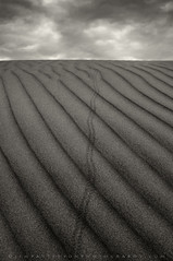 Signs of Life - Sand Dunes, Death Valley National Park, California (Jim Patterson Photography) Tags: california longexposure morning travel sky blackandwhite usa monochrome vertical clouds sunrise landscape sand artistic patterns dunes valley ripples toned stovepipewells deathvalleynationalpark inyocounty mesquitedunes wintertracks jimpattersonphotography jimpattersonphotographycom seatosummitworkshops seatosummitworkshopscom