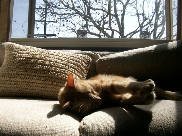 Lazy Cajun