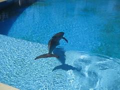 Siegfried & Roy's Secret Garden & Dolphin Habitat (thundergoat) Tags: lasvegas nevada mirage secretgarden miragehotel siegfriedroy dolphinhabitat