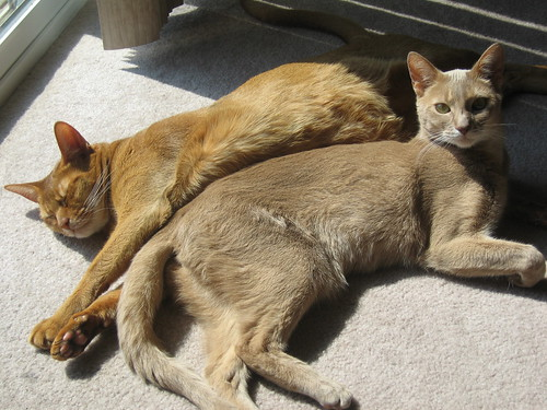 Phoenix & Pharaoh Sunbathing
