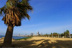 Shore scenery - Kuwait (khalid almasoud) Tags: leica march scenery flickr all photographer 5  palm shore rights estrellas kuwait khalid reserved dlux photographyrocks almasoud flickraward dlux5