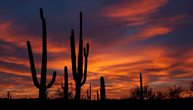 Sundown in the Sonoran Desert