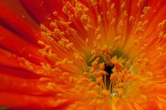 ... e finalmente il sole! (sandroo) Tags: flowers macro primavera closeup canon spring tammy fiori tamron90 5dmkii 5dmk2