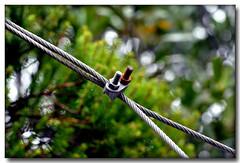 DIFERENCIAS (J.L.G.C.) Tags: color macro nikon desenfoque contraste tamron90mm