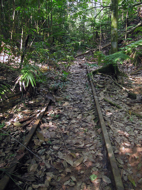 Tracks in Forest
