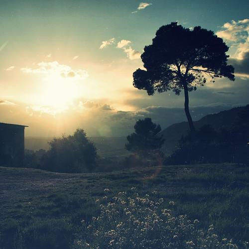[フリー画像] 自然・風景, 草原, 樹木, 201103301900