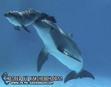 dolphin1DM0510_468x309