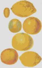 citrus fruits (nichestitch) Tags: shop vintage pattern cross stitch handmade embroidery needlepoint etsy artfire