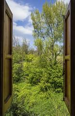 ddddd (agnese_mari) Tags: windows italy verde green window nature yellow nikon italia colore empty room natura finestra giallo napoli naples colori marche d3100