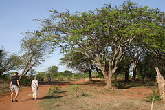 tanzania stora 1898