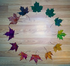 Cycle of Leaf  (3) (Simon Dell Photography) Tags: cycle leaf autumn fall colors maple leafs leaves leve wood back ground life simon dell photography art wall hanging print 2016 awsome xxx bbc winter sheffield hackenthorpe s12 shirebrook valley