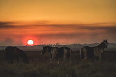 Beautiful orange sky. (Pablin79) Tags: sky fog sunset sun light outdoor orange silhouette animal colors evening horizon horse shadows dawn horses outdoors dusk backlit afternoon argentina mammal goldenhour misiones cavalry posadas noperson