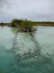 Sendero (NeKoMaTa K) Tags: color verde agua eau himmel paisagem cu ciel rbol laguna paysage landschaft silvestre paesaggio cil bacalar lacune