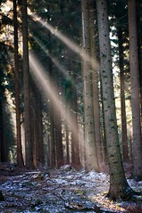 Sunbeam (frank-heinen-photographer) Tags: afsnikkor2470mm128ged ast blatt blau copyright d300 eifel eis farbe frankheinen frost himmel holz landschaft laubbaum nationalparkeifel natur naturschutz nikon nrw photographer raureif schnee wald weite winter ©frankheinen sonne sonnenstrahl sunbeam