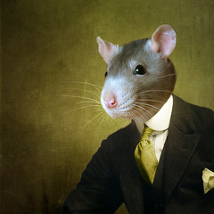 The townman - le citadin (Martine Roch) Tags: portrait man cute animal square rat gorgeous surreal surrealist manray petitechose photommontage martineroch flypapertextures flypapertexturesfunny