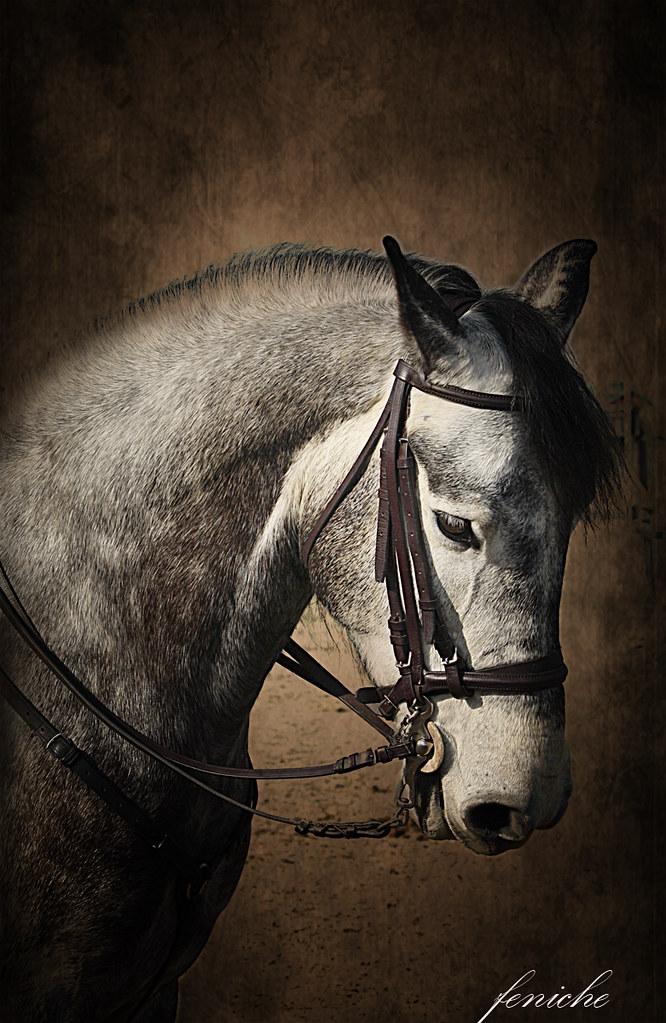 caballo de pedro