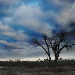 what (moosebite) Tags: blue trees sky cloud tree texture nature field clouds river landscape nikon colorado colorful artistic background textures backgrounds d80 moosebite jrgoodwin