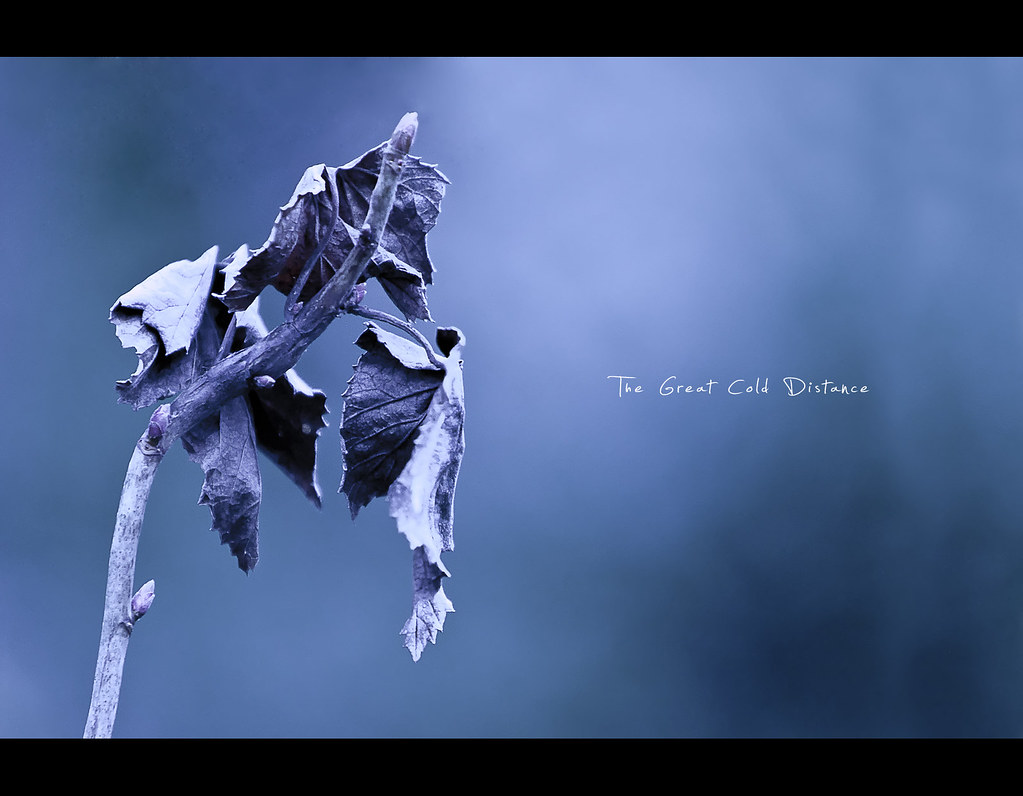 Project 365, Day 192, 192/365, bokeh, cold, the great cold distance, blue, leaves, leaf, dead leaves, dead leaf, katatonia, dark, brench, Canon EF 70-200 f2.8 IS,