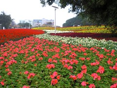 Colorful Flower Farms (地景花海區)