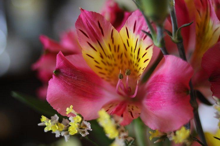 02-15-flowers1