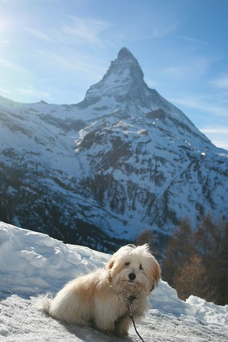 Ruben and the Matterhorn