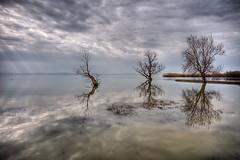 Manyas Lake (Nejdet Duzen) Tags: trip travel cloud lake reflection tree turkey türkiye bulut ağaç göl yansıma manyas turkei seyahat bandırma manyaslake saariysqualitypictures mygearandme manyasgölü