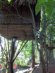 100_0196 (travellersai) Tags: kerala treehouse wayanad teaestate wildboar bandipur chital vythri banasuradam soojiparafalls streamvalleyresorts