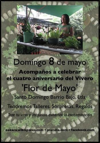 Flor de Mayo 2011