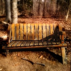 Teddy Roosevelt Island in winter (LaDawna's pics) Tags: forest bench washingtondc dc woods teddyrooseveltisland