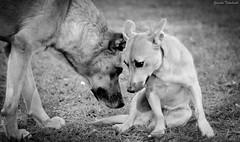 Se aproxime... (Yuricka Takahashi) Tags: nikon mg cachorro takahashi horizonte belo d90 yuricka