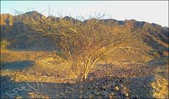 C360_2011-02-23 17-46-50 (MagicPAD - ) Tags: uae