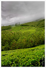 Green Rush (Abhinav Singhai) Tags: vacation clouds indian tammy kerala tourist tamron munnar teagardens uwa d90 indiavacation incredibleindia nikond90 tamron1024mm indiatourist munnarmagic magicalmunnar