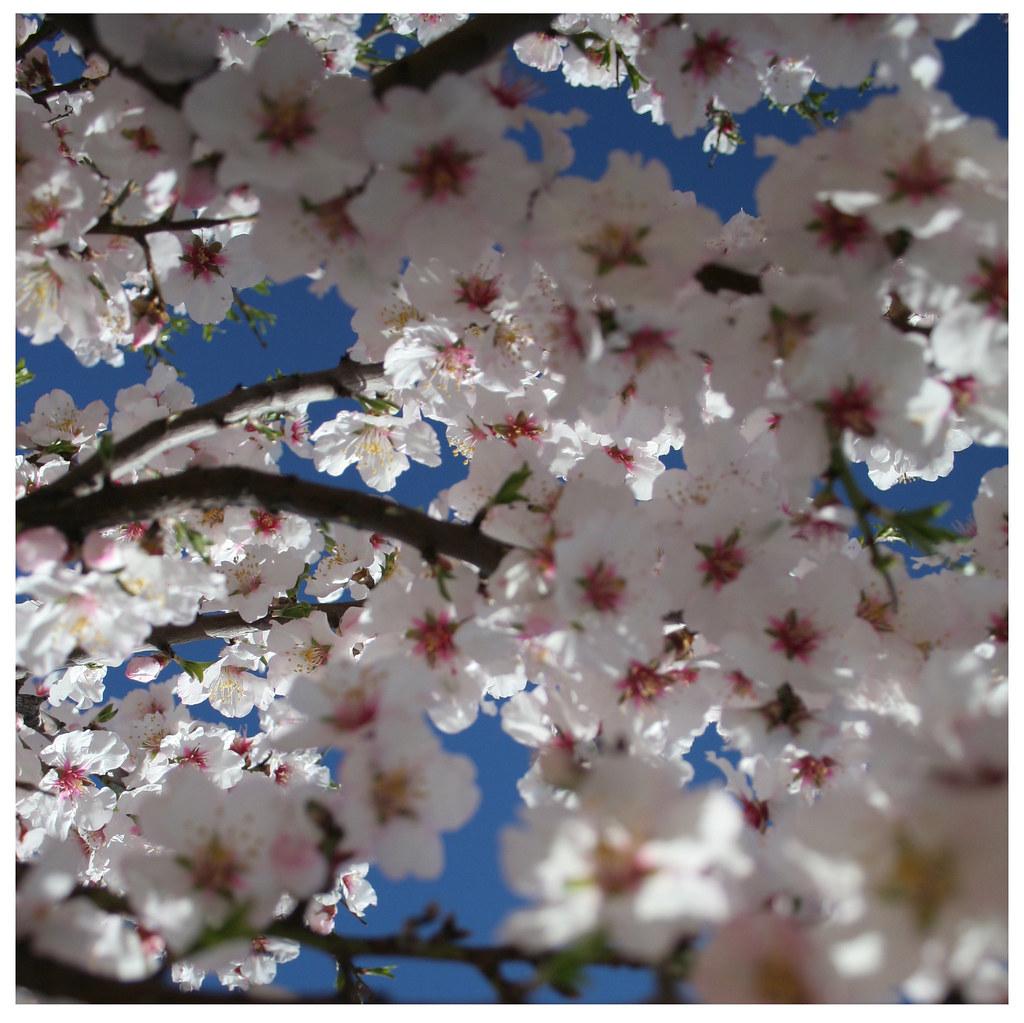 Maraña que brota primaveras
