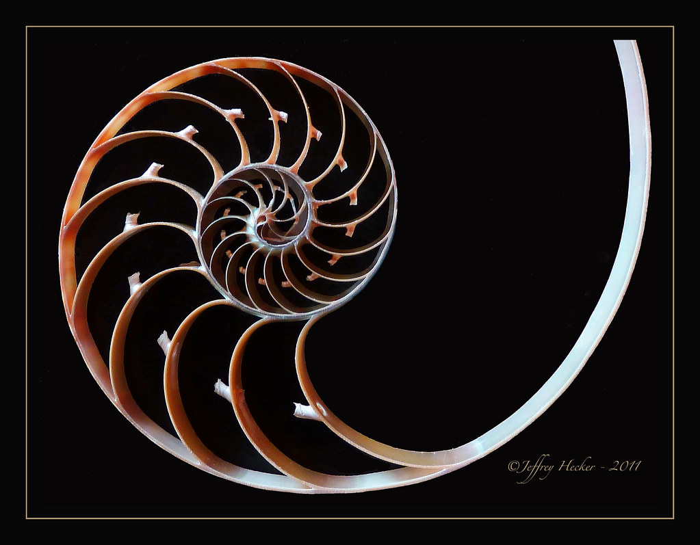 The Chambered Nautilus Analysis