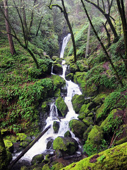 cataract falls trail (californiabirdy) Tags: california green canon river waterfall moss stream hiking marin watershed mttam tamalpais ferns tam cataractfalls cataracttrail s95