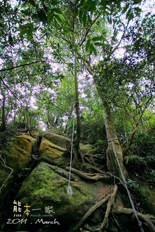 三峽五寮尖登山 踩在腳下的山陵線 牛背脊山線