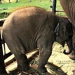 20101126_2535 Mae Sa Elephant Camp. ปางช้างแม่สา thumbnail