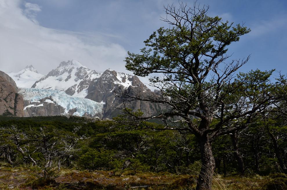 La caminata por el bosque virgen, con la vista del glaciar piedras blancas de fondo es parte de uno de los circuitos auto guiados que salen desde el chalten. (Roberto Dam - Patagonia, Argentina)